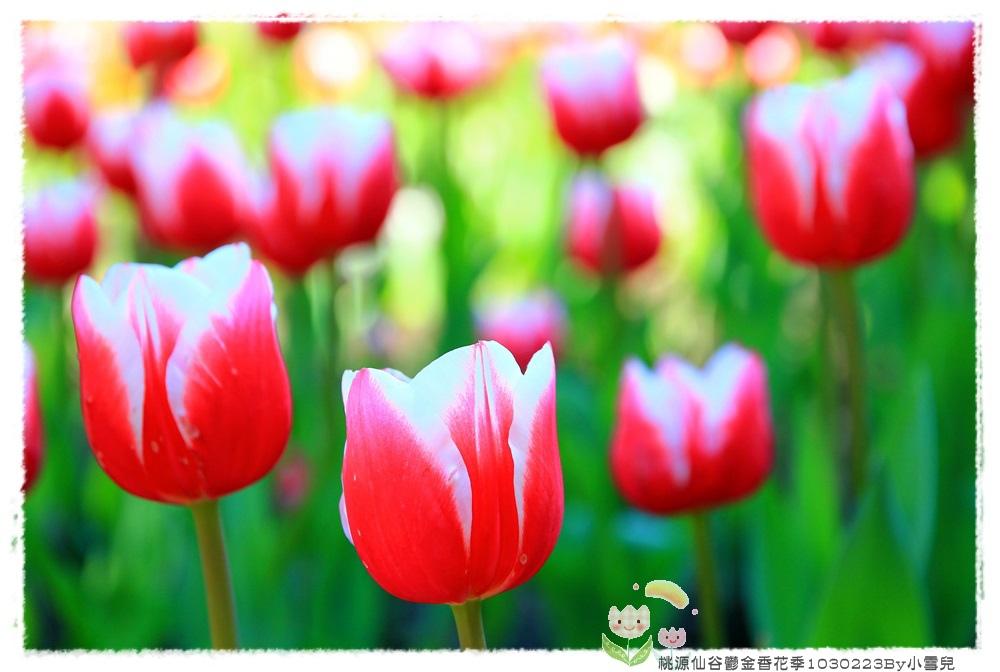 桃源仙谷鬱金香花季1030223By小雪兒IMG_3992.JPG