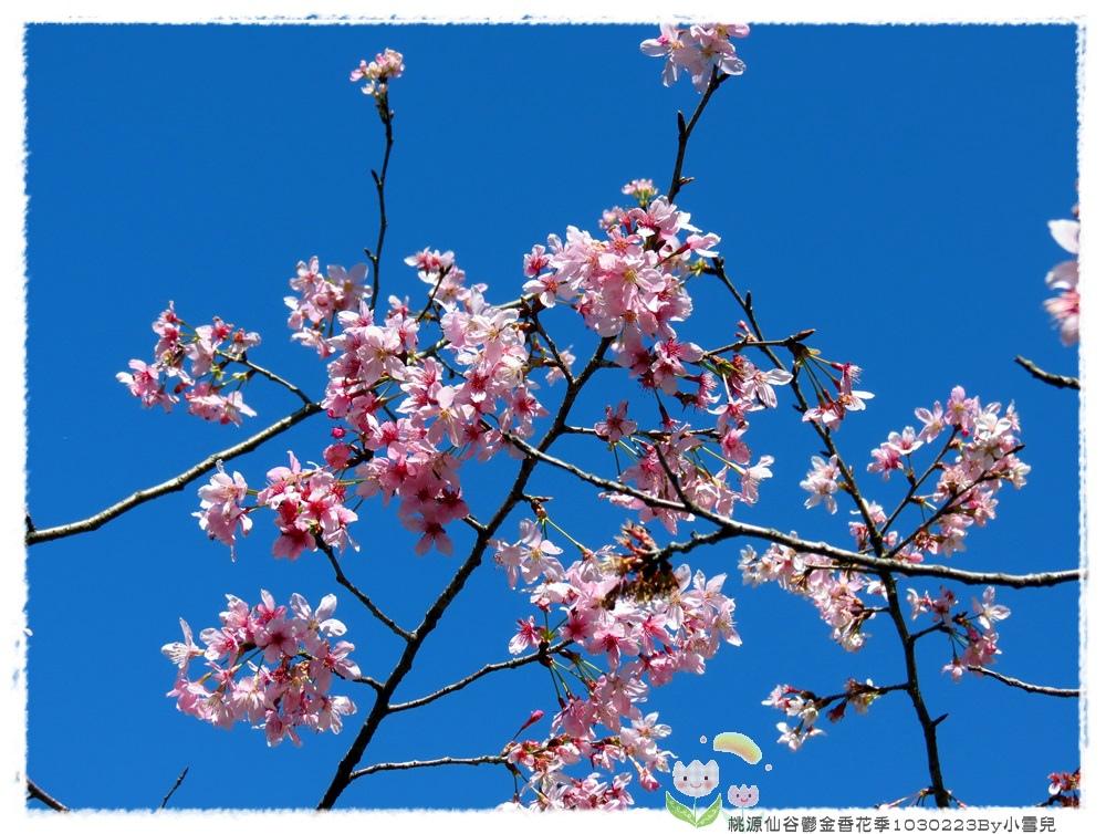 桃源仙谷鬱金香花季1030223By小雪兒IMG_7443.JPG