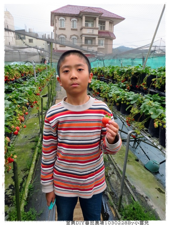金勇DIY蕃茄農場1030228By小雪兒IMG_7574.JPG