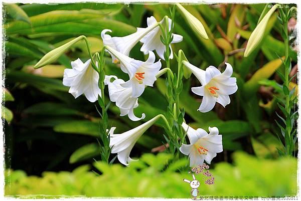 台北植物園布政使司文物館 by小雪兒1030511IMG_6944.JPG