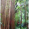 台北植物園布政使司文物館 by小雪兒1030511IMG_6949.JPG