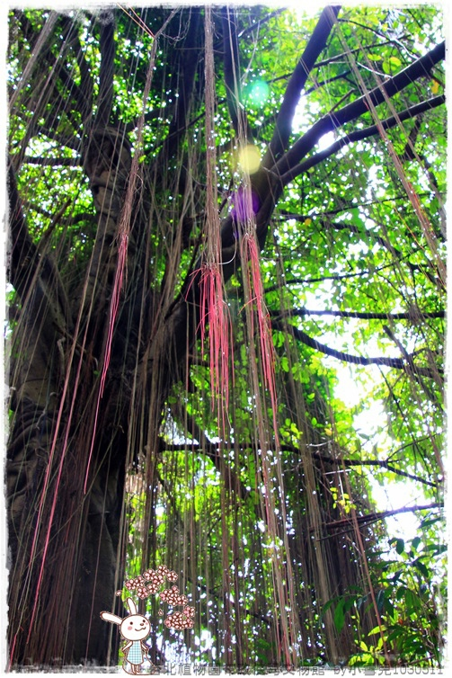 台北植物園布政使司文物館 by小雪兒1030511IMG_6962.JPG