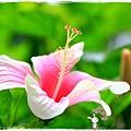 台北植物園布政使司文物館 by小雪兒1030511IMG_6986.JPG