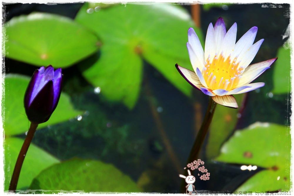 台北植物園布政使司文物館 by小雪兒1030511IMG_7000.JPG