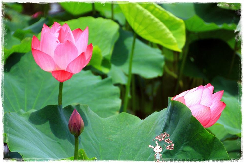 台北植物園布政使司文物館 by小雪兒1030511IMG_7004.JPG