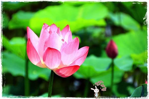 台北植物園布政使司文物館 by小雪兒1030511IMG_7012.JPG