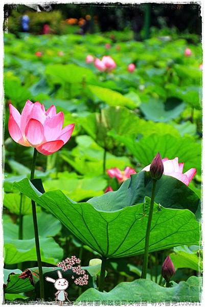 台北植物園布政使司文物館 by小雪兒1030511IMG_7015.JPG