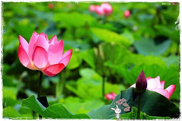 台北植物園布政使司文物館 by小雪兒1030511IMG_7016.JPG