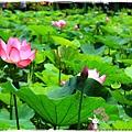 台北植物園布政使司文物館 by小雪兒1030511IMG_7017.JPG
