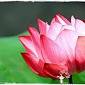 台北植物園布政使司文物館 by小雪兒1030511IMG_7021.JPG