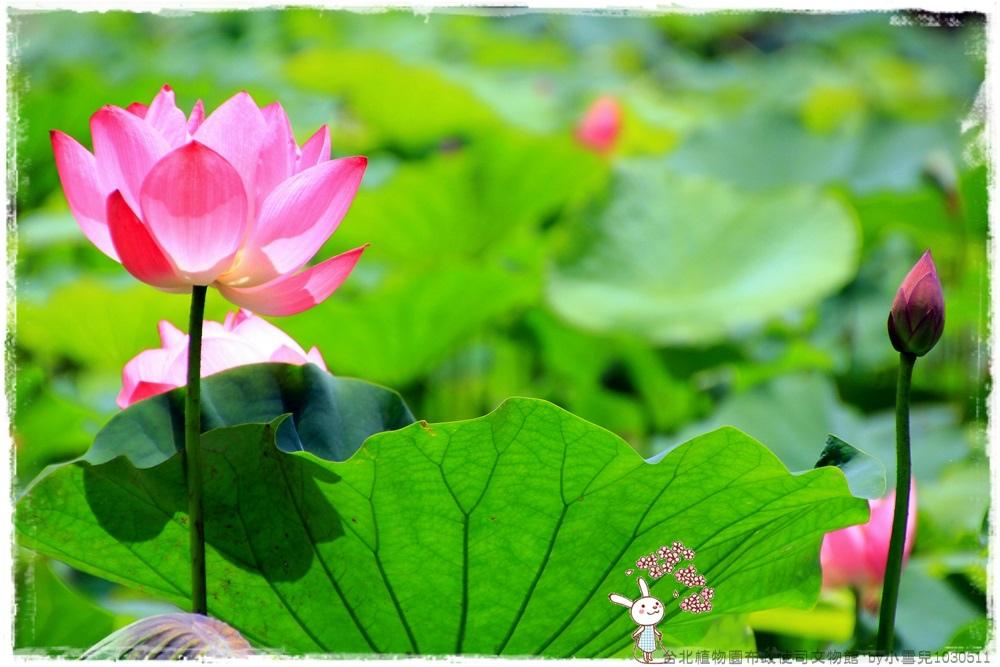 台北植物園布政使司文物館 by小雪兒1030511IMG_7027.JPG