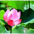 台北植物園布政使司文物館 by小雪兒1030511IMG_7074.JPG