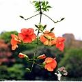 台北植物園布政使司文物館 by小雪兒1030511IMG_7081.JPG