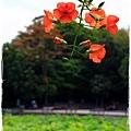 台北植物園布政使司文物館 by小雪兒1030511IMG_7082.JPG