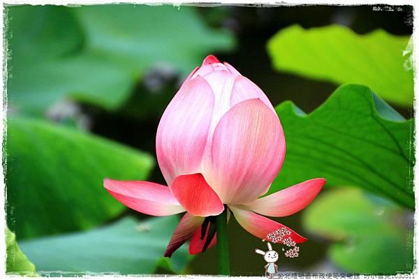 台北植物園布政使司文物館 by小雪兒1030511IMG_7085.JPG