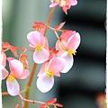 台北植物園布政使司文物館 by小雪兒1030511IMG_7127.JPG
