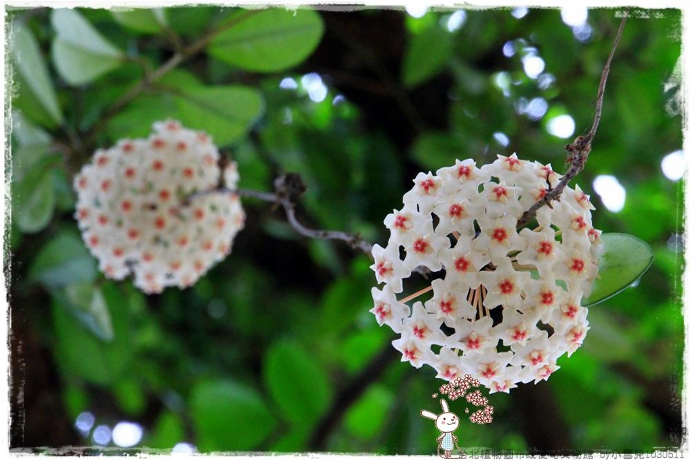 台北植物園布政使司文物館 by小雪兒1030511IMG_7135.JPG