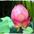 台北植物園布政使司文物館 by小雪兒1030511IMG_9178.JPG
