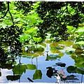台北植物園布政使司文物館 by小雪兒1030511IMG_9180.JPG