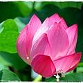 台北植物園布政使司文物館 by小雪兒1030511IMG_9197.JPG