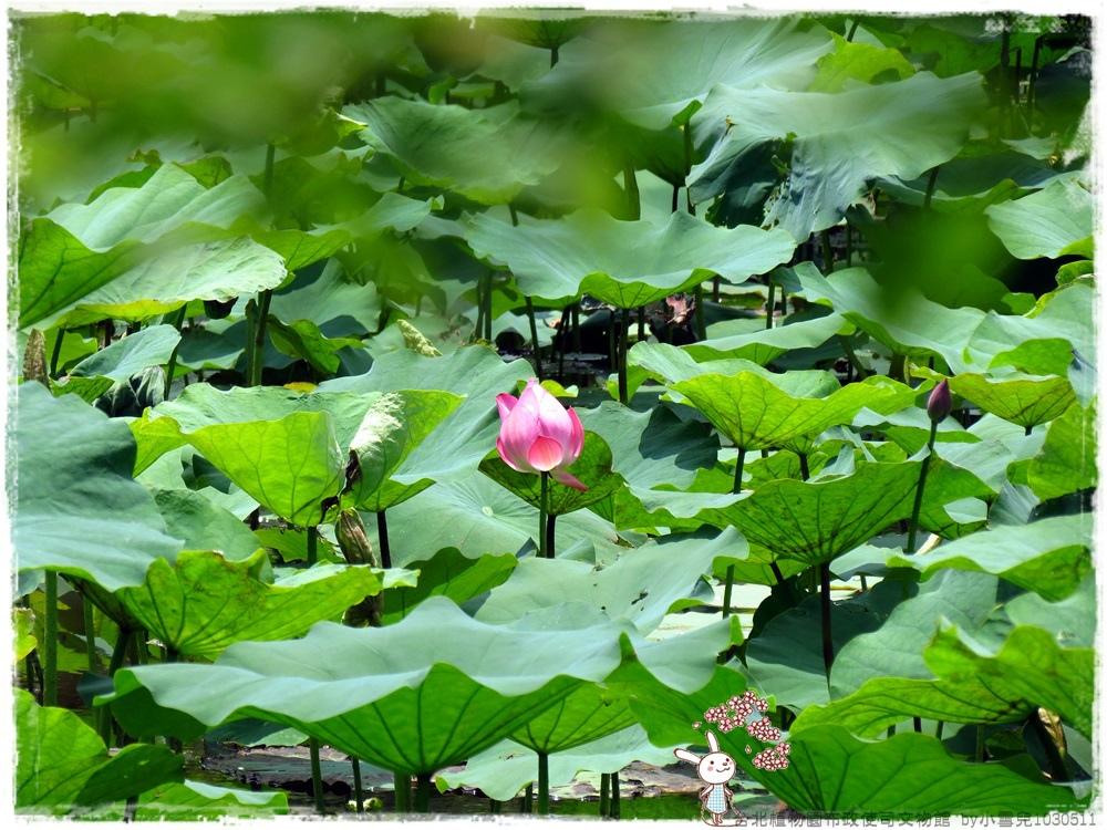 台北植物園布政使司文物館 by小雪兒1030511IMG_9201.JPG