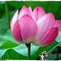 台北植物園布政使司文物館 by小雪兒1030511IMG_9207.JPG