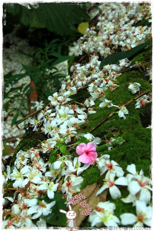 宜蘭仁山植物園by小雪兒1030426IMG_6142.JPG