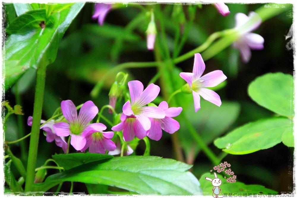 宜蘭仁山植物園by小雪兒1030426IMG_6163.JPG
