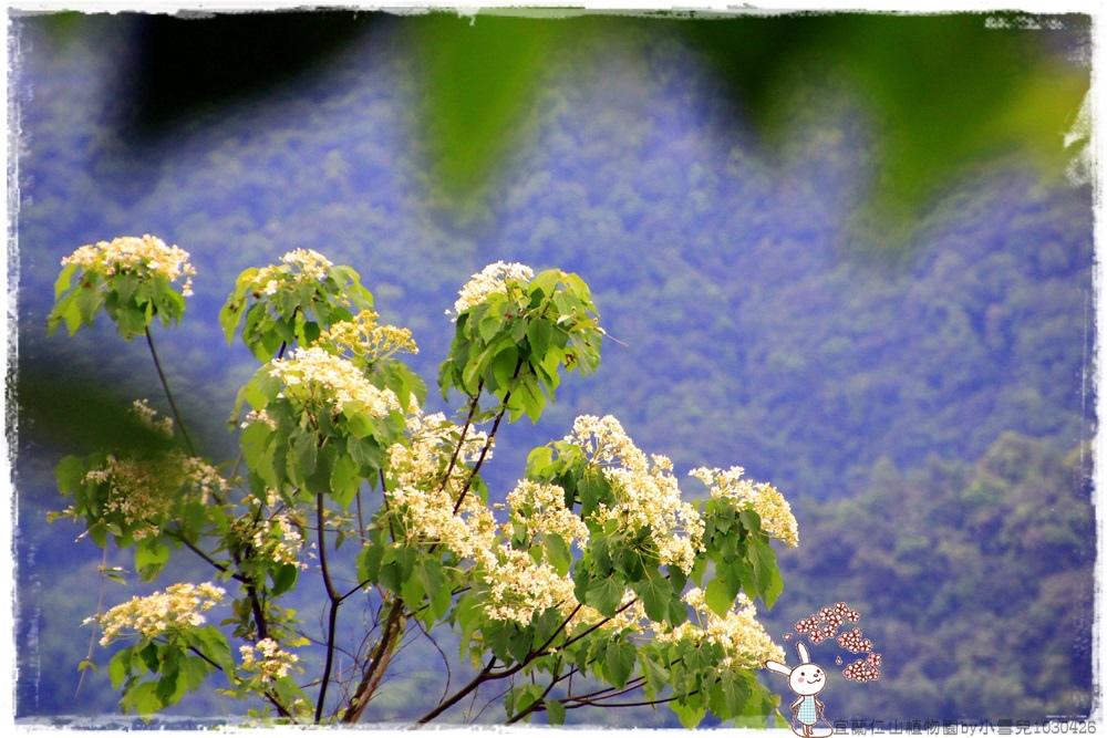 宜蘭仁山植物園by小雪兒1030426IMG_6165.JPG