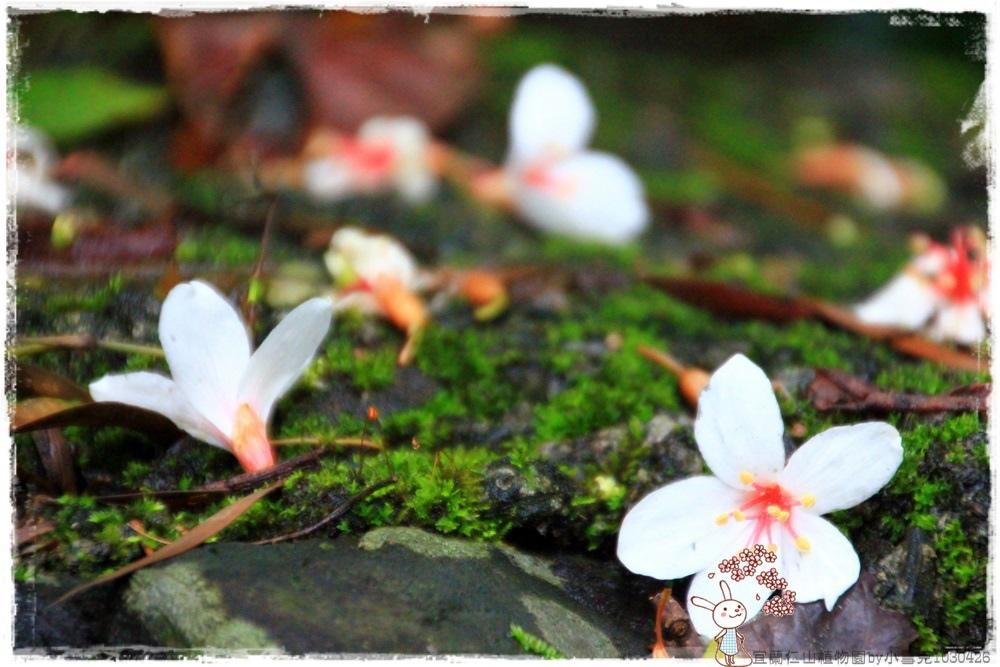 宜蘭仁山植物園by小雪兒1030426IMG_6168.JPG