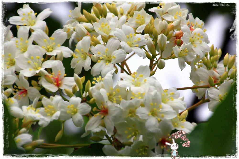 宜蘭仁山植物園by小雪兒1030426IMG_6189.JPG