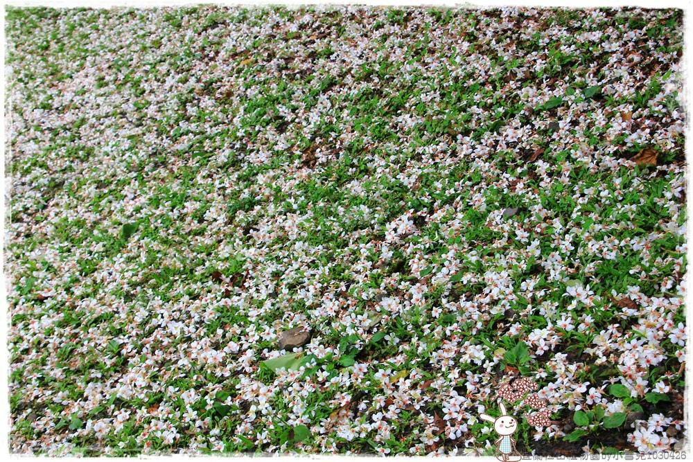 宜蘭仁山植物園by小雪兒1030426IMG_6191.JPG