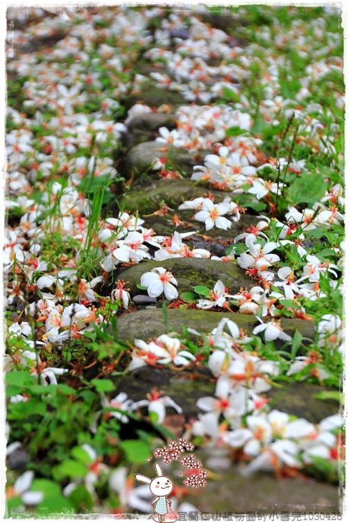 宜蘭仁山植物園by小雪兒1030426IMG_6196.JPG