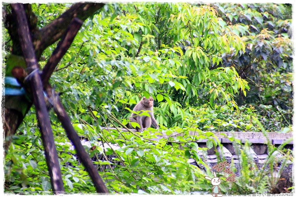 宜蘭仁山植物園by小雪兒1030426IMG_6270.JPG