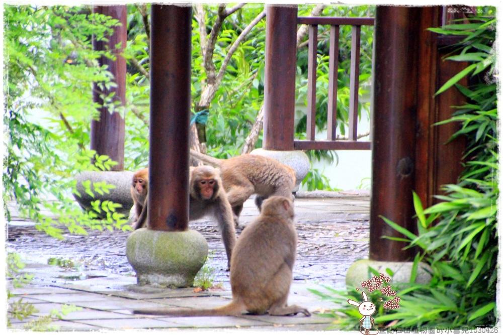 宜蘭仁山植物園by小雪兒1030426IMG_6272.JPG
