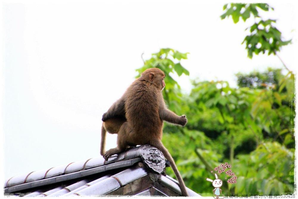 宜蘭仁山植物園by小雪兒1030426IMG_6279.JPG
