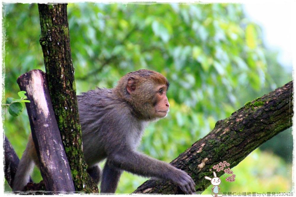 宜蘭仁山植物園by小雪兒1030426IMG_6291.JPG