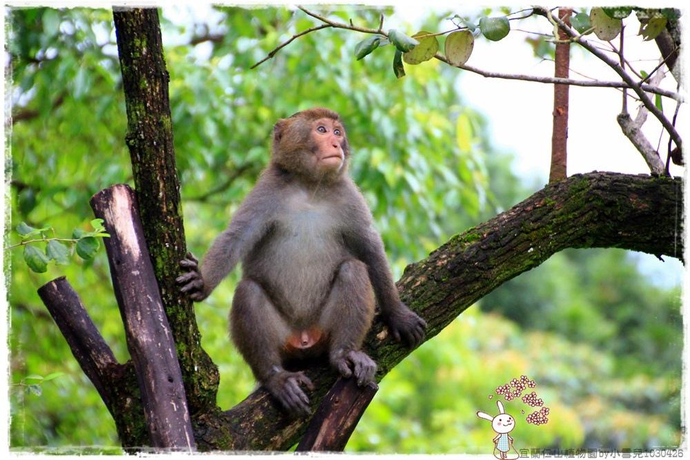 宜蘭仁山植物園by小雪兒1030426IMG_6293.JPG