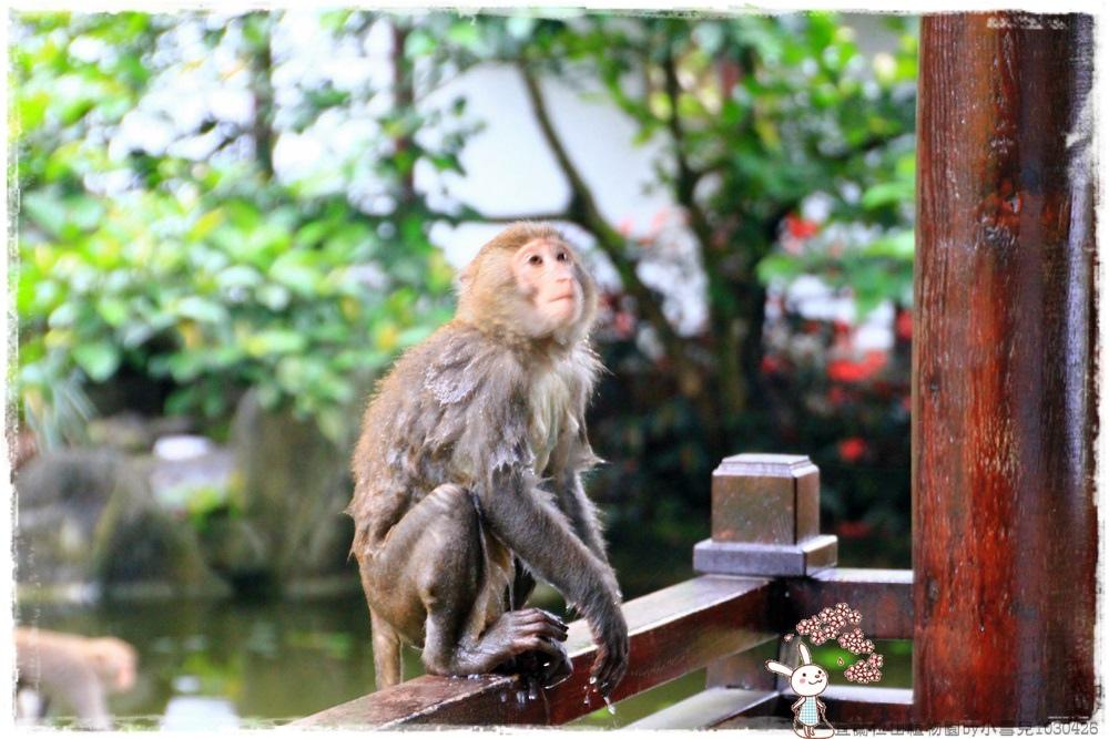 宜蘭仁山植物園by小雪兒1030426IMG_6301.JPG