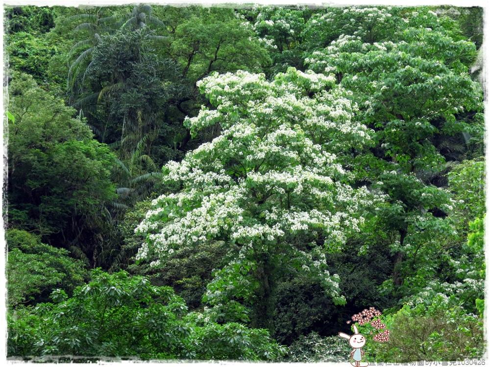 宜蘭仁山植物園by小雪兒1030426IMG_8584.JPG