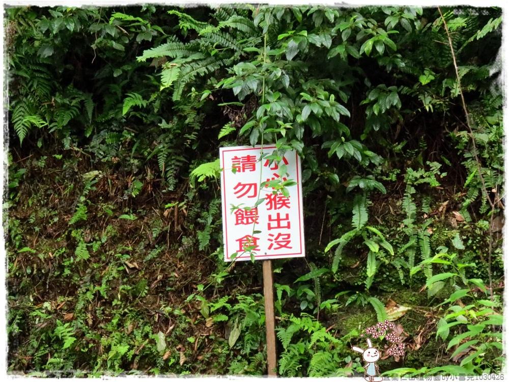 宜蘭仁山植物園by小雪兒1030426IMG_8608.JPG
