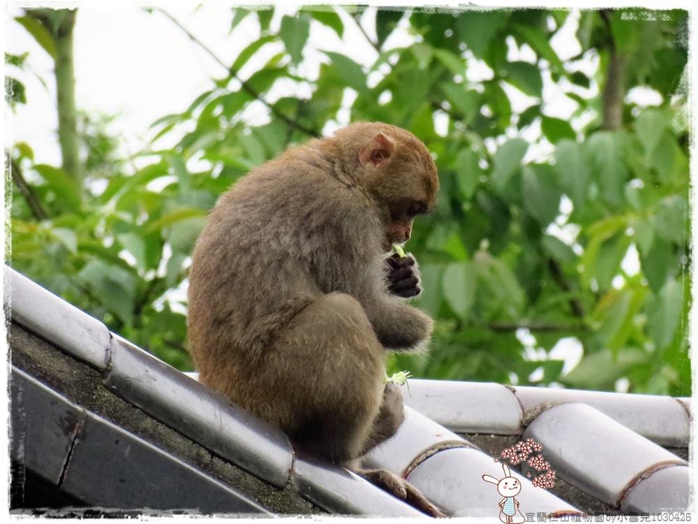 宜蘭仁山植物園by小雪兒1030426IMG_8660.JPG