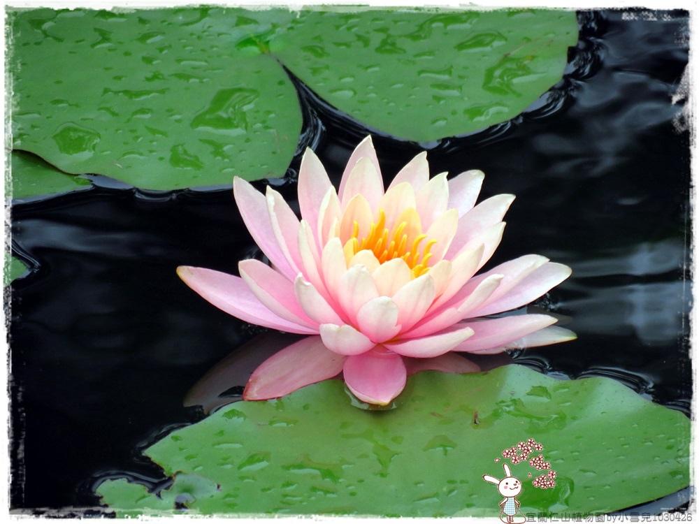宜蘭仁山植物園by小雪兒1030426IMG_8666.JPG