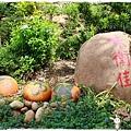 新埔柿餅趣by小雪兒1031005IMG_4273.JPG