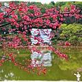 角板山賞梅趣1040125IMG_6681.JPG