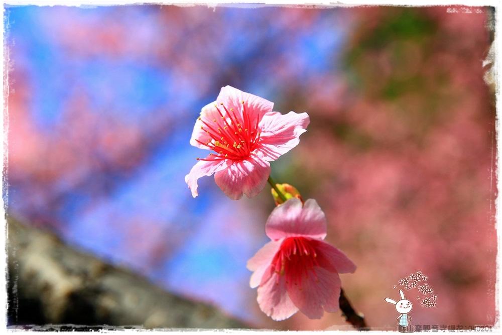 壽山巖觀音寺櫻花1040201IMG_6812.JPG