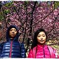 壽山巖觀音寺櫻花1040201IMG_6913.JPG