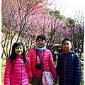 壽山巖觀音寺櫻花1040201IMG_6941.JPG