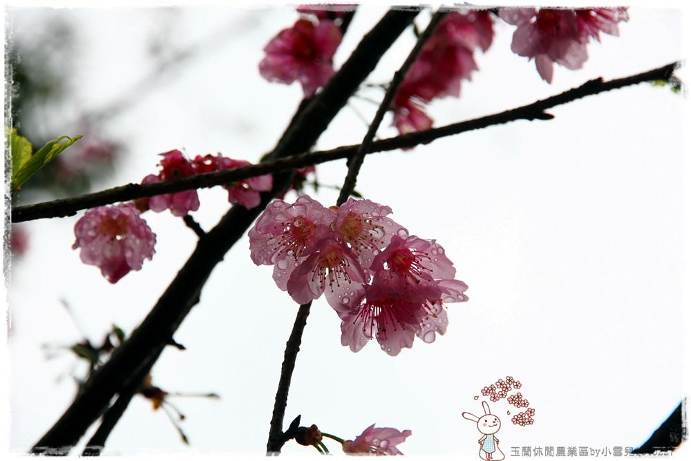 玉蘭休閒農業區by小雪兒1040227IMG_7412.JPG
