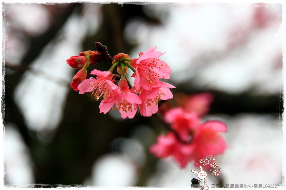 玉蘭休閒農業區by小雪兒1040227IMG_7422.JPG